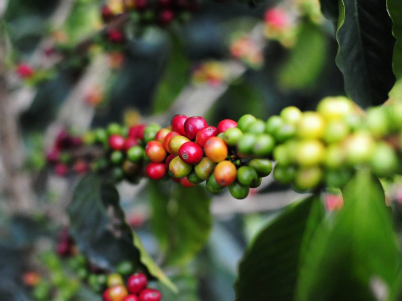 Coffee tour in Colombia