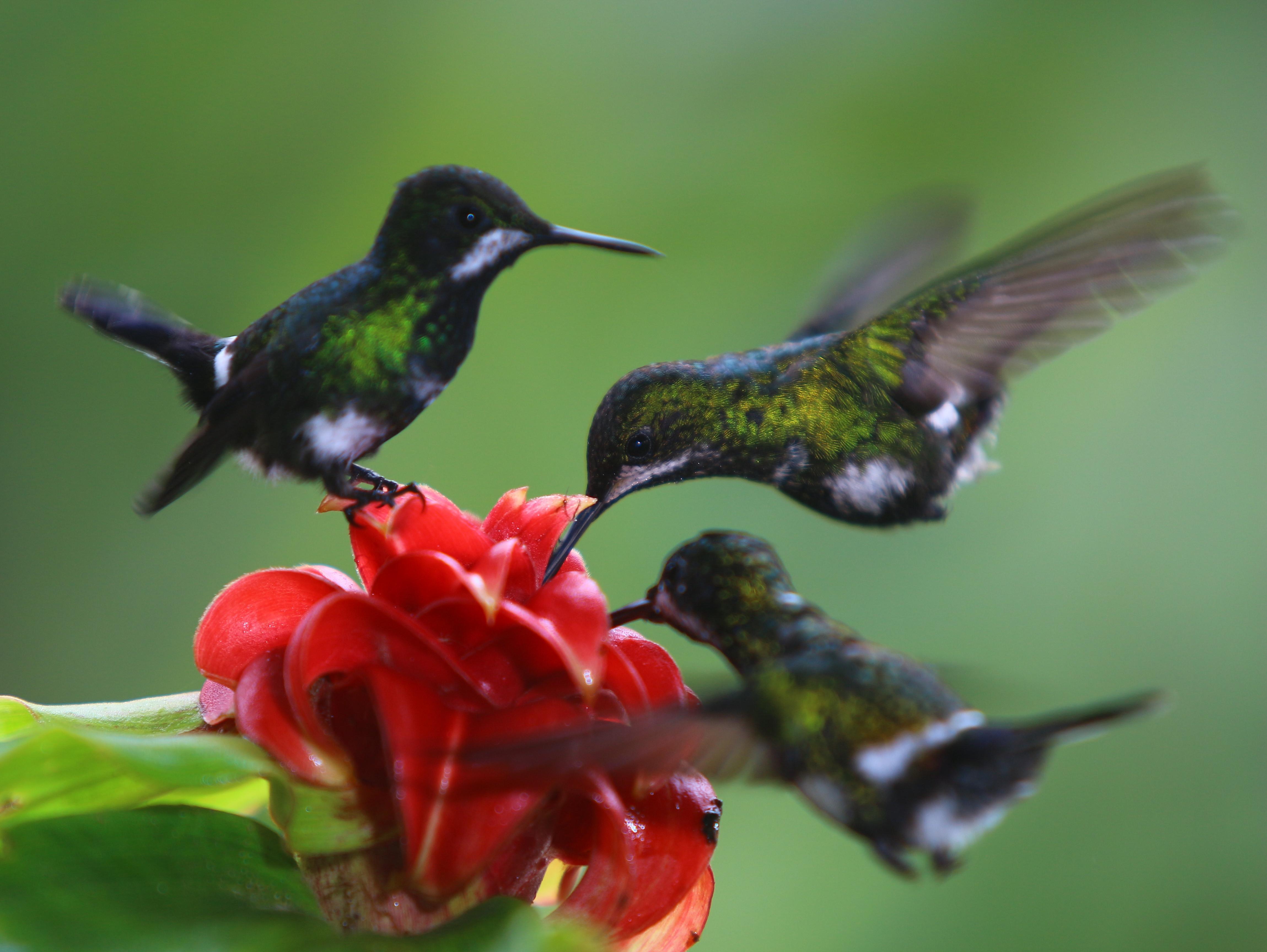 Amazonian birdlife