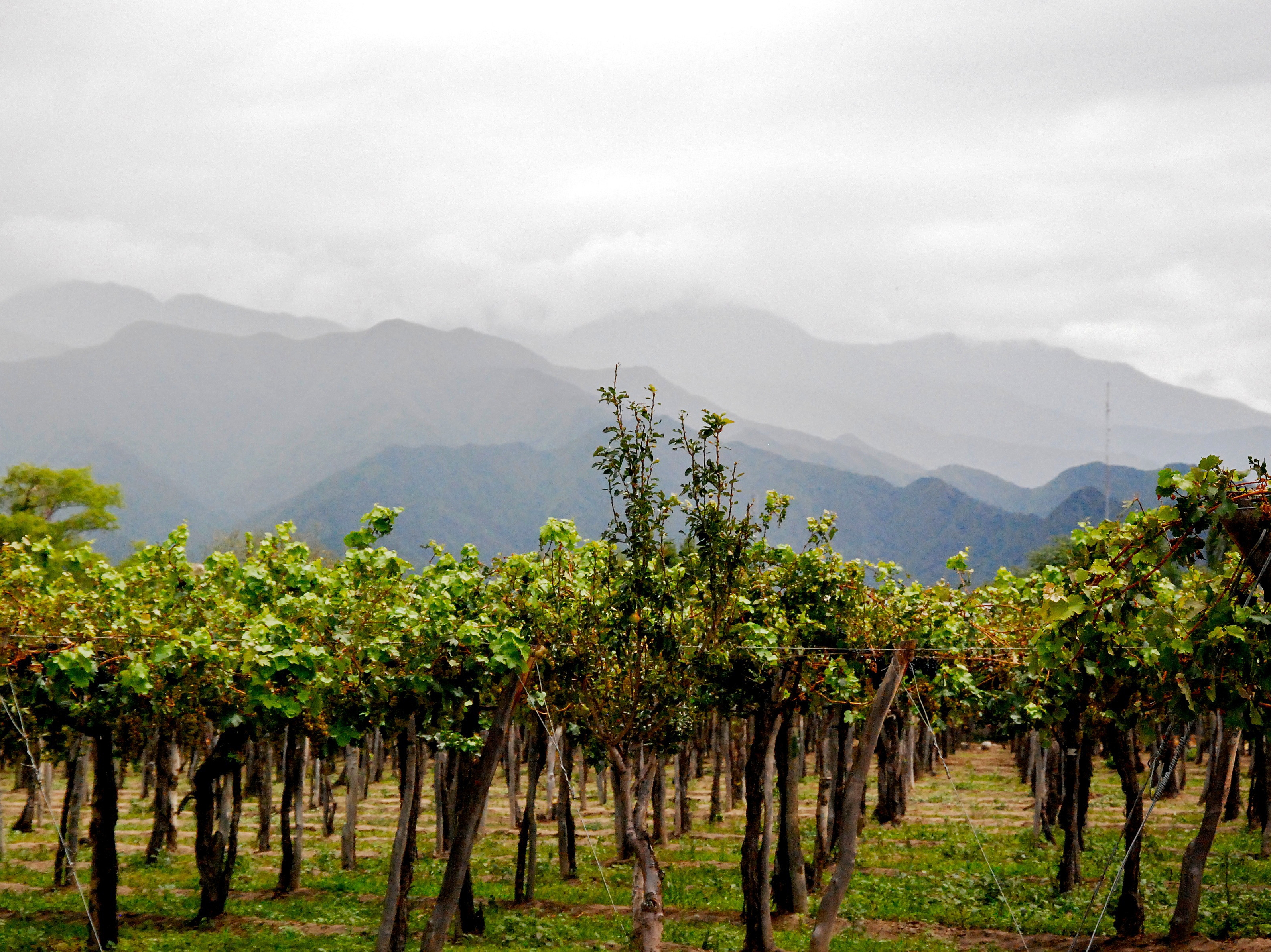 Cafayate vineyards, Northwest Argentina