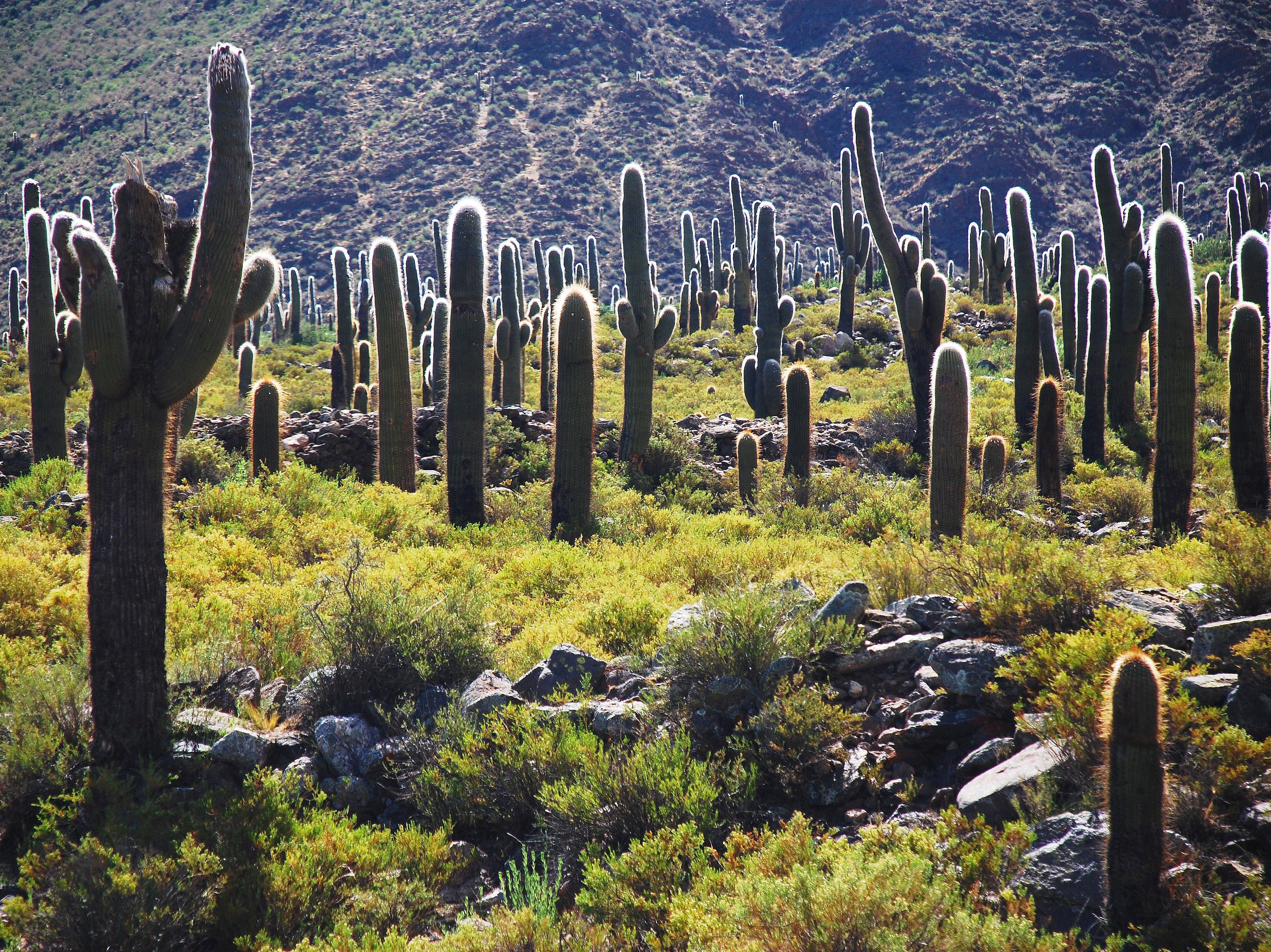 Los Cardones National Park, Salta