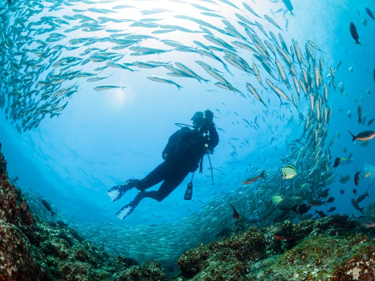 Diving in the Galapagos