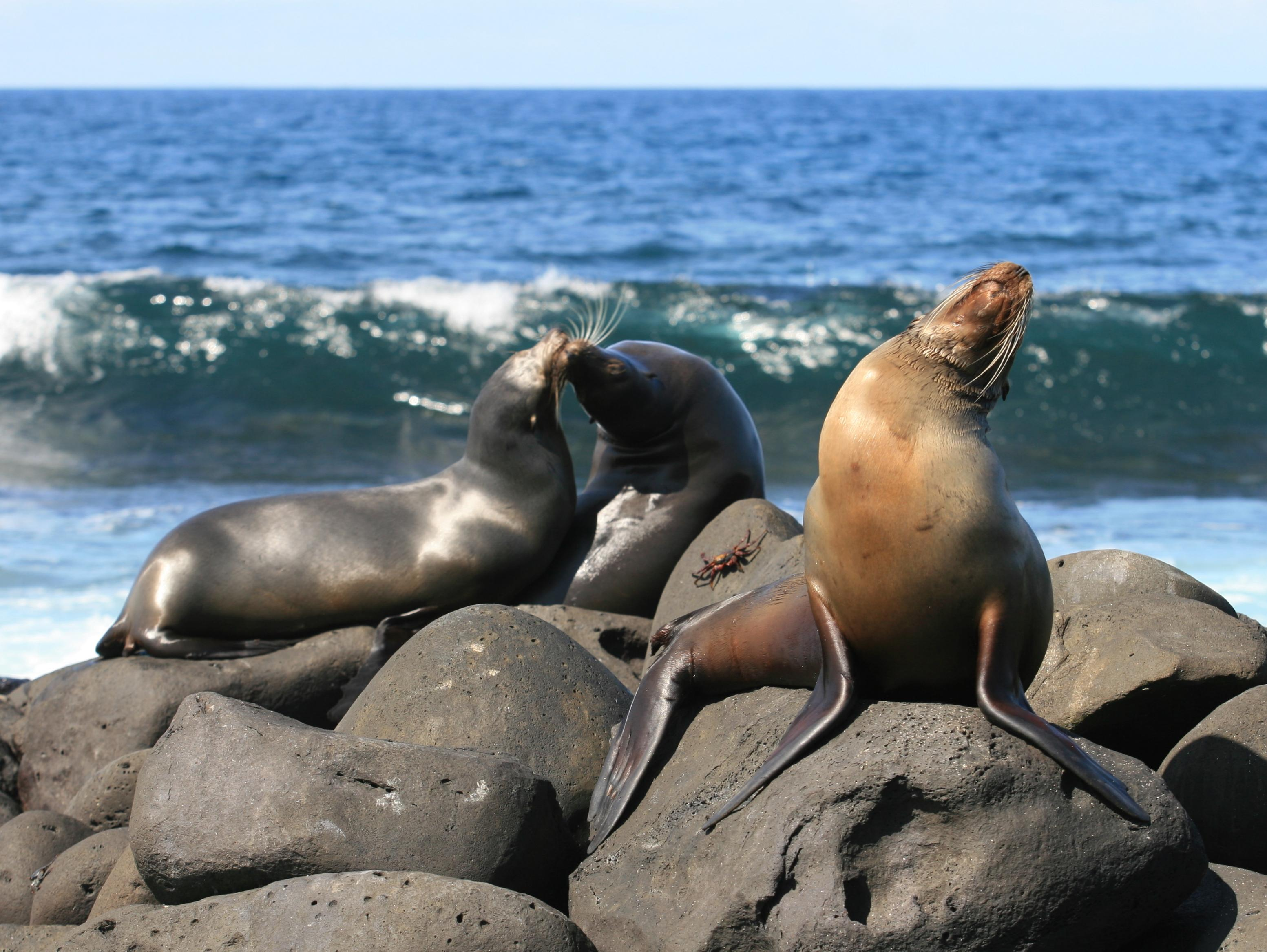 Sea Lions - Endangered Species in the Galapagos