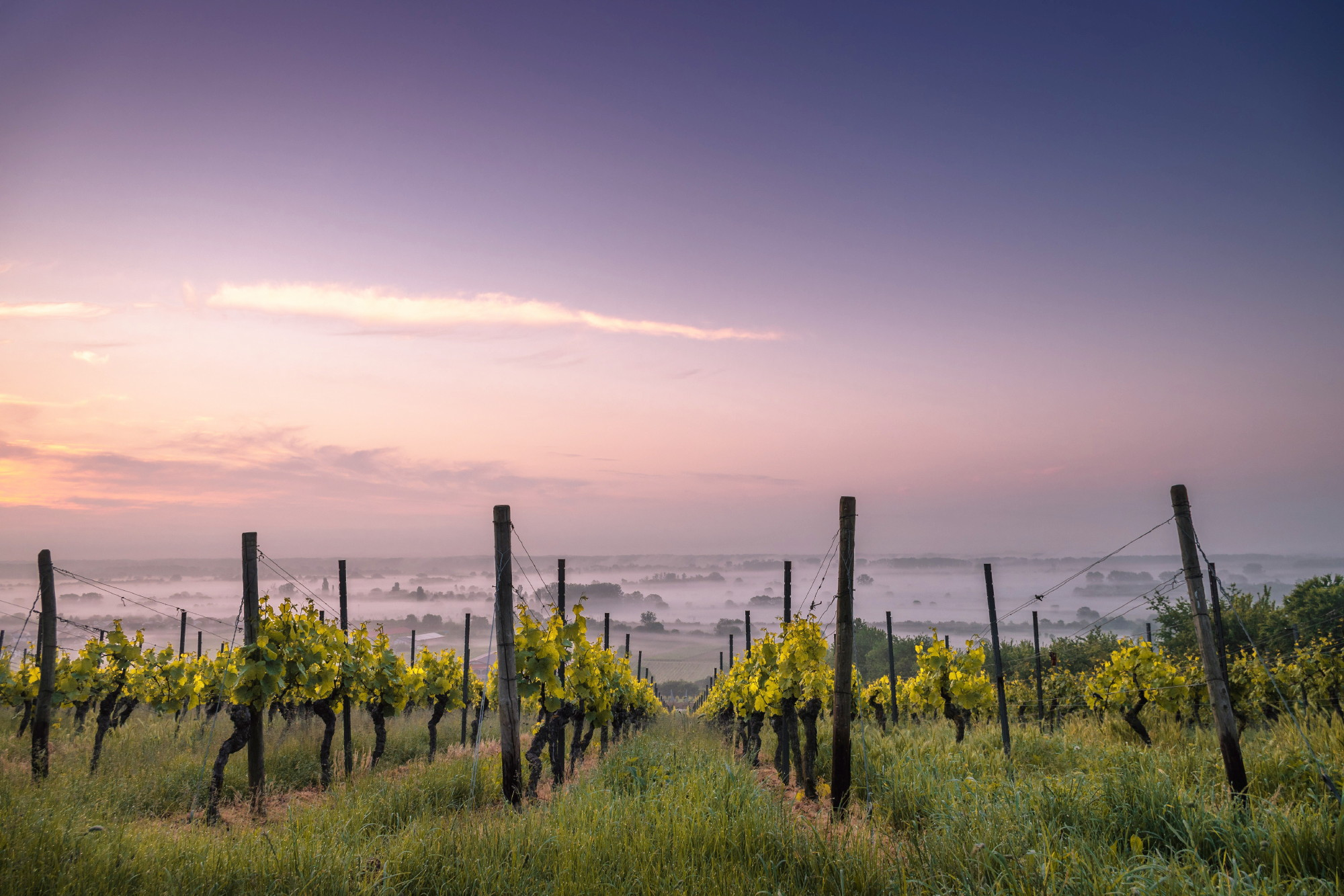 Wine, Uruguay New Travel Destination