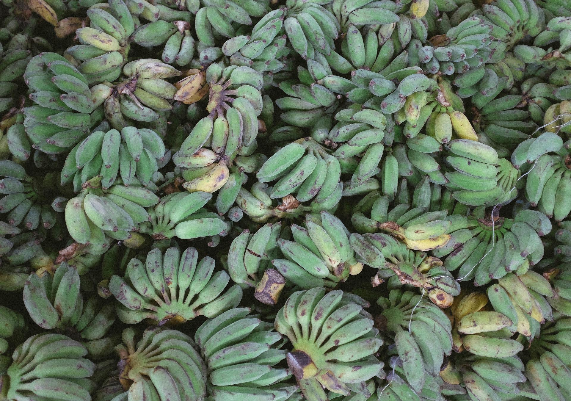 Plantains, A Foodie's Guide to Ecuador