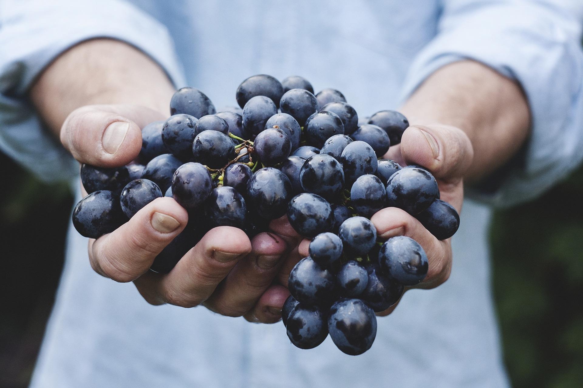 Wine tasting in Uruguay