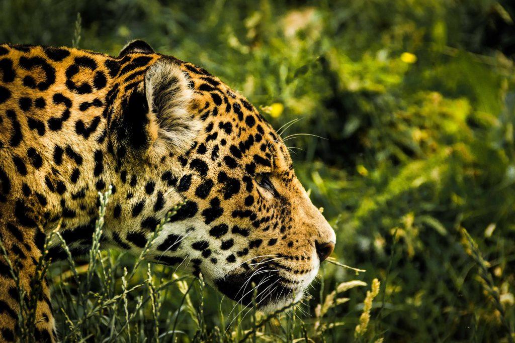 Brazilian Amazon | Discover Your South America