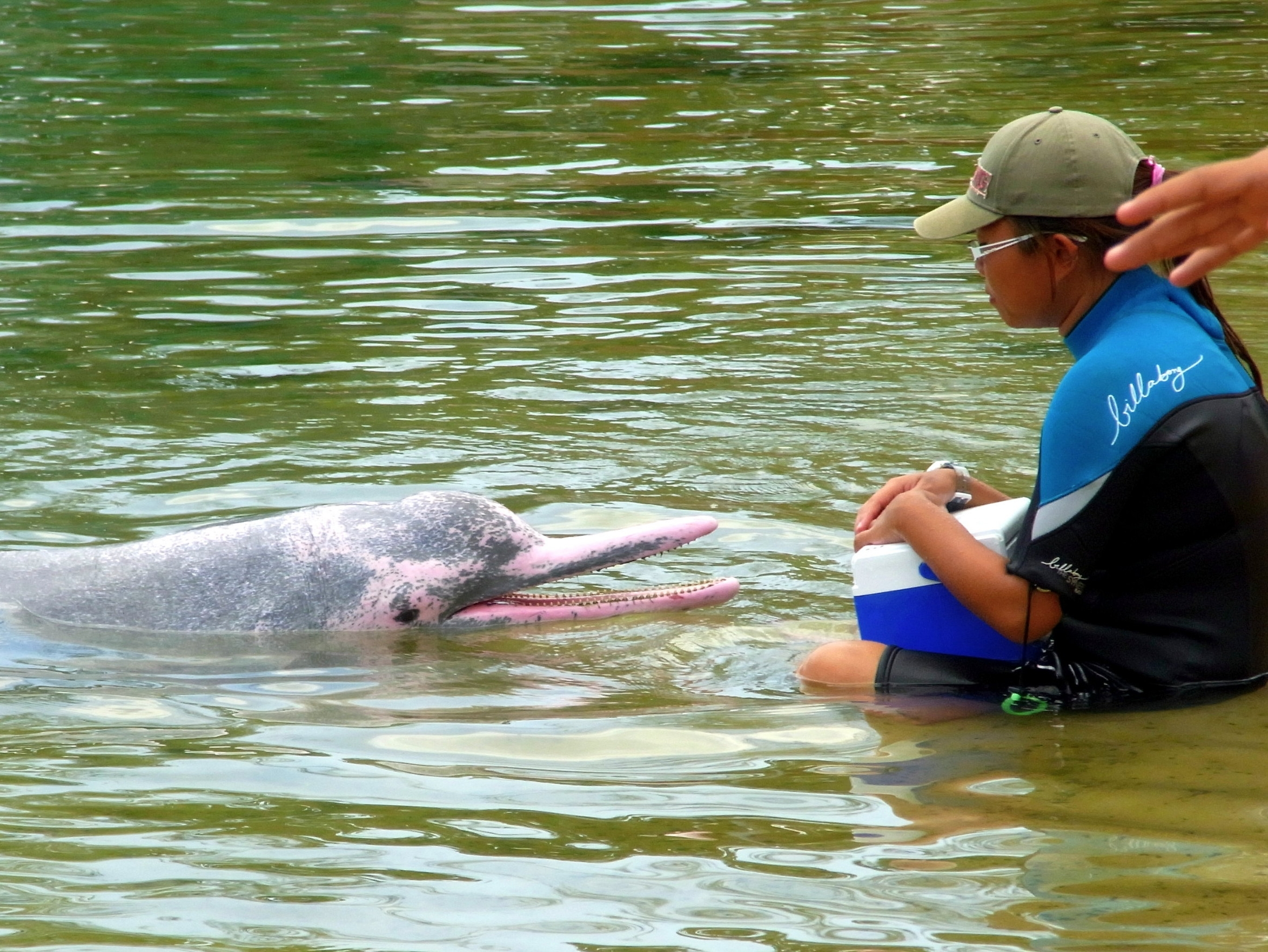 Pink River Dolphin in the Amazon | Bolivia Wildlife Blog