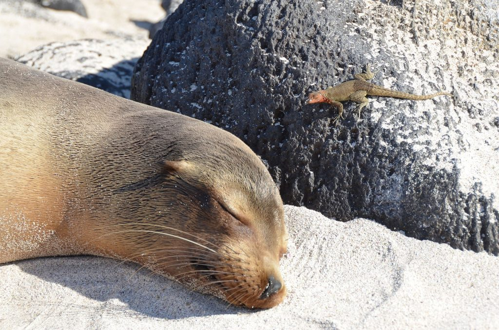 Sea Lion in the Galapagos | Galapagos Wildlife Calendar