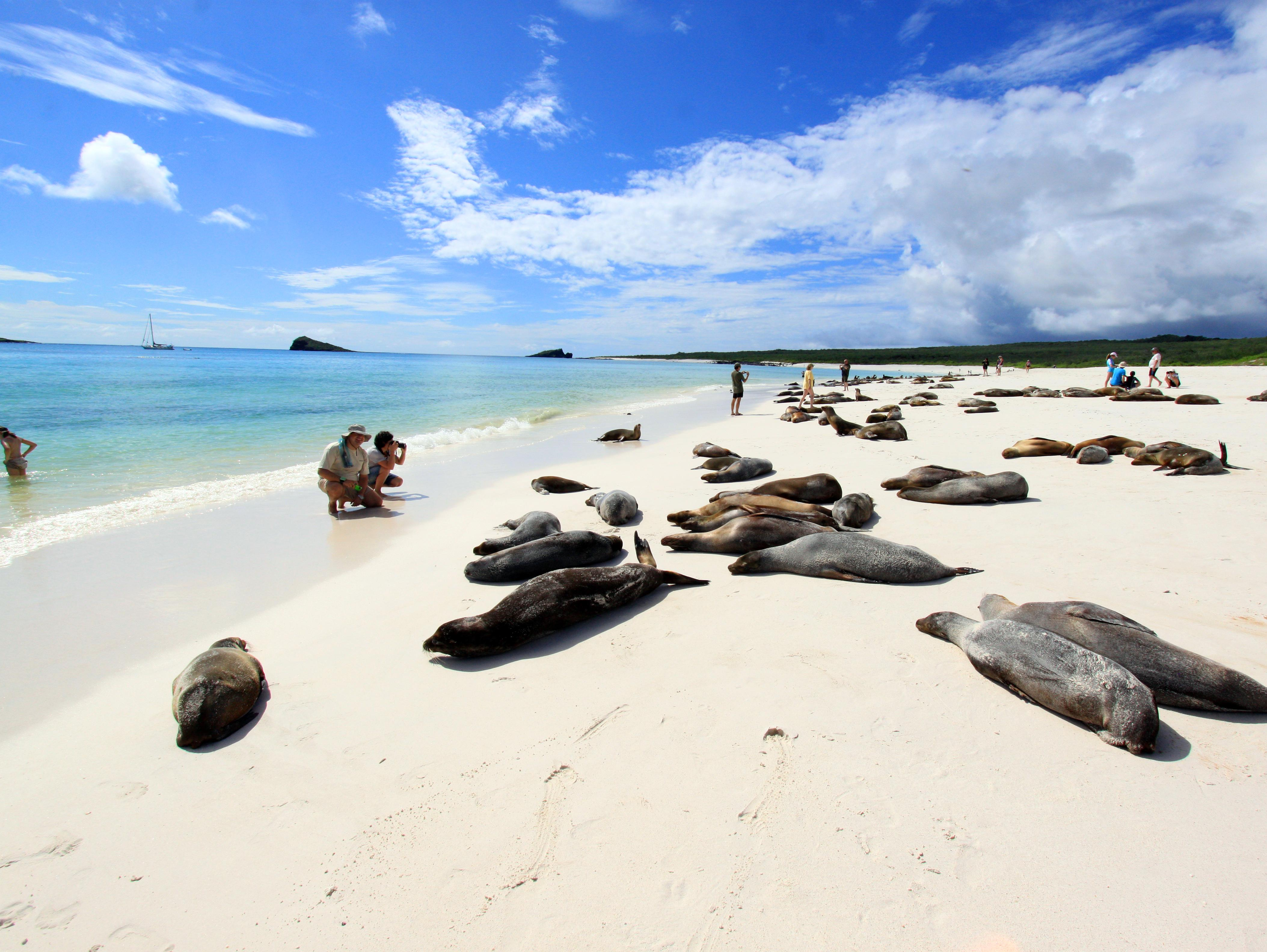 The Galapagos | New Year's Eve in South America
