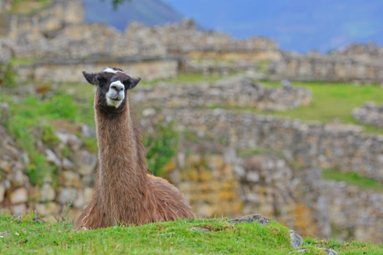 Chachapoyas, Peru | Discover Your South America Blog