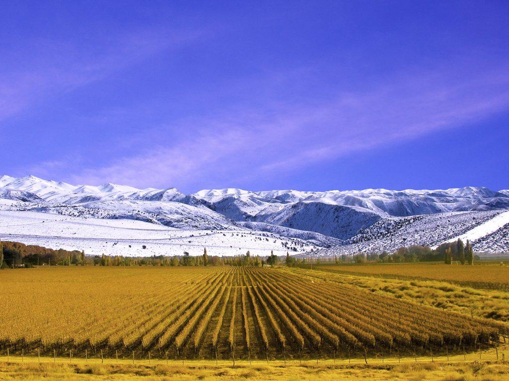 Mendoza vines | Discover Your South America Blog