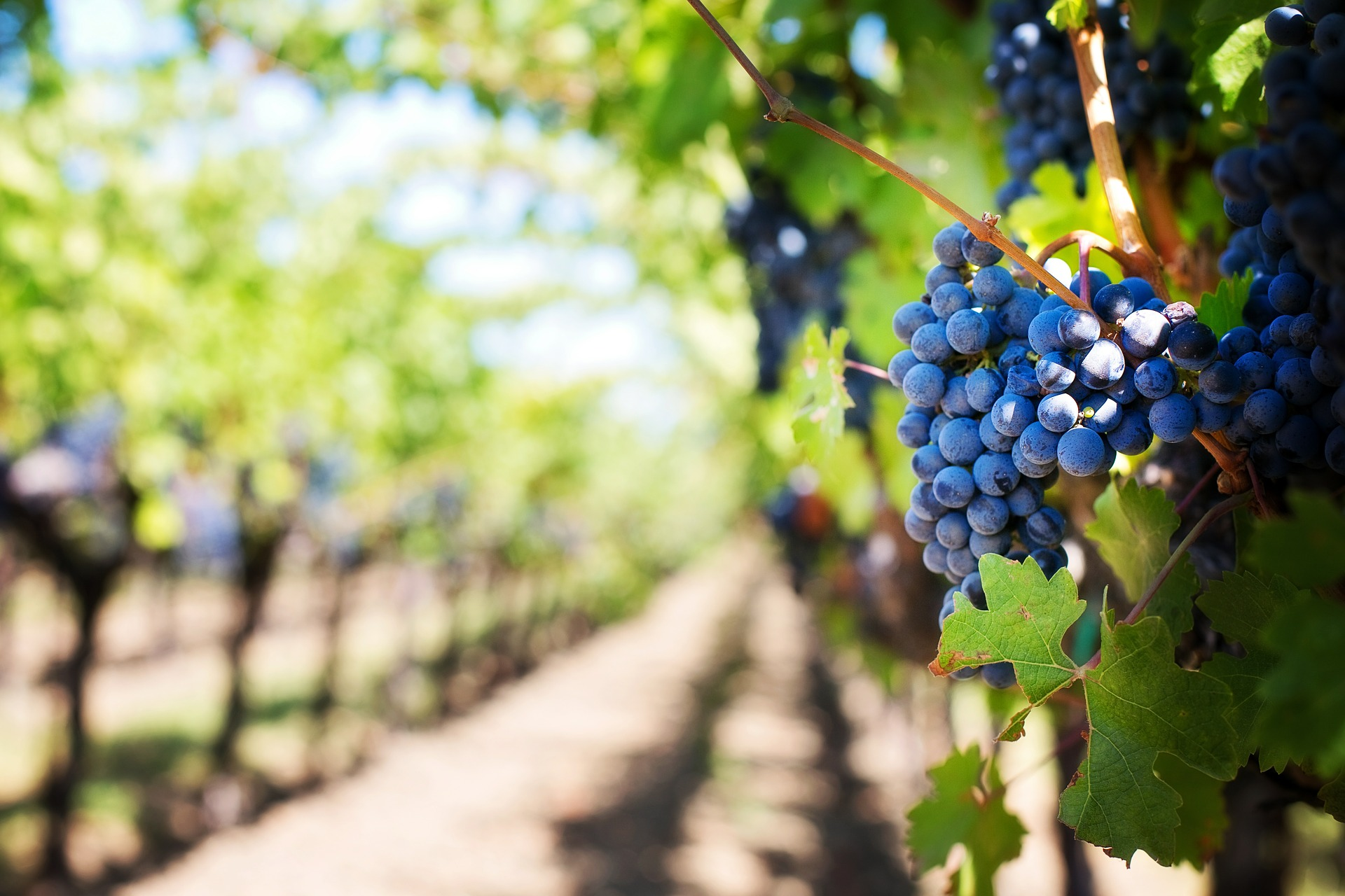Vineyard | Discover Your South America Blog