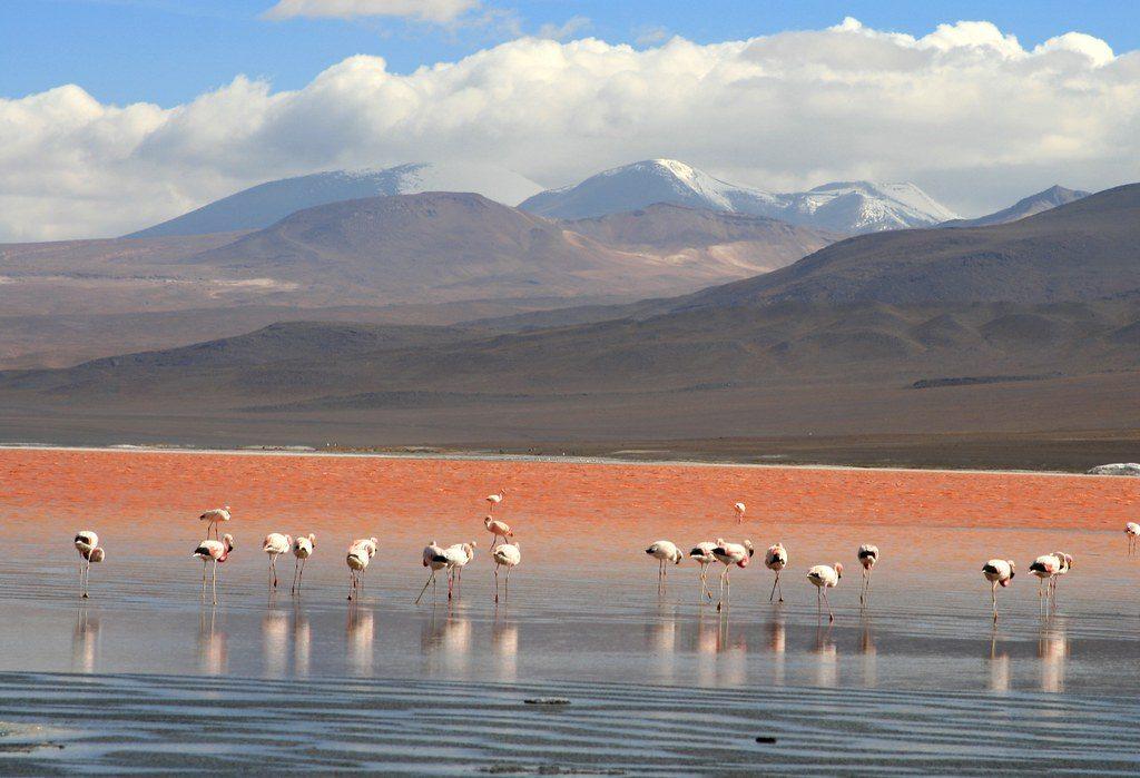 Flamingos   Discover Your South America Blog