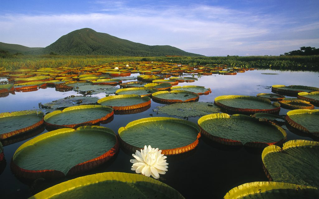 Pantanal Wetlands | Discover Your South America Blog