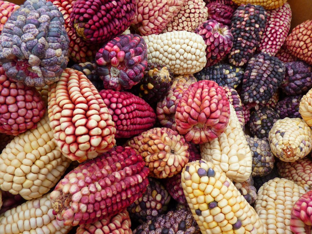 Peruvian corn | Discover Your South America Blog