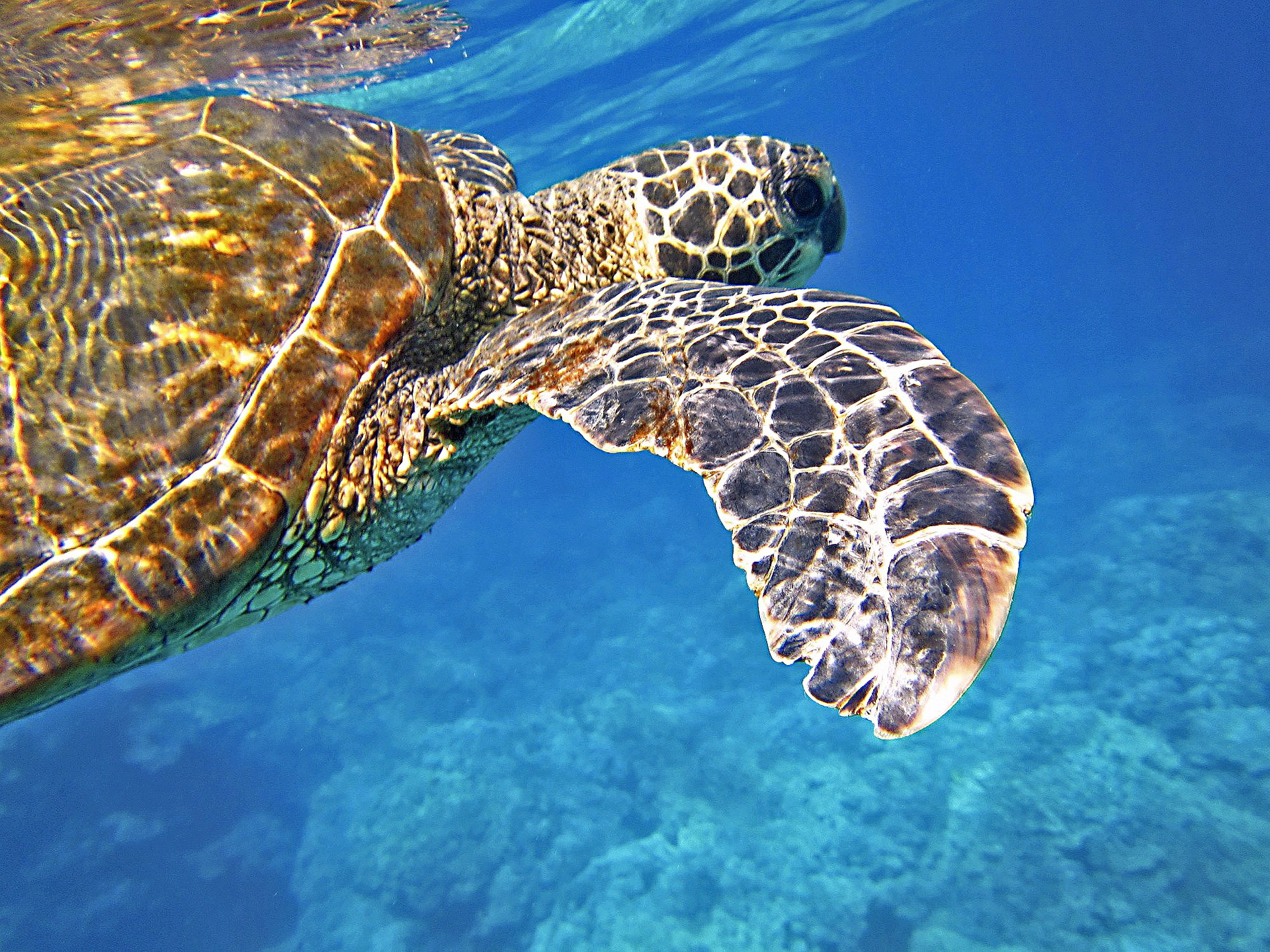 Sea Turtle, Galapagos | Discover Your South America Blog