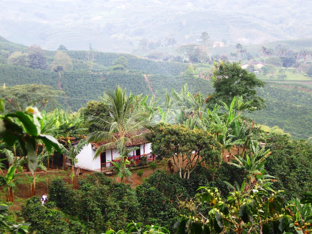 Coffee Region, Colombia   Discover Your South America Blog