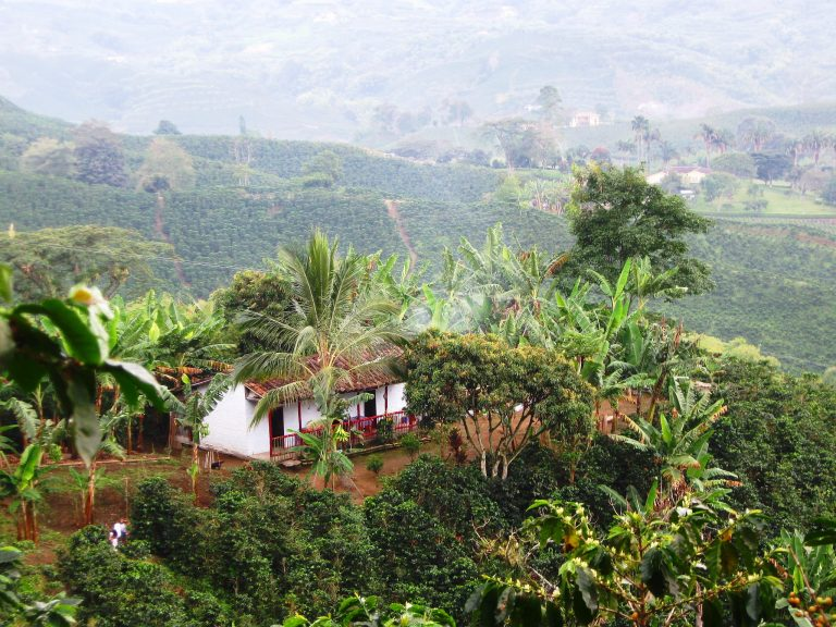 Coffee Region, Colombia | Discover Your South America Blog