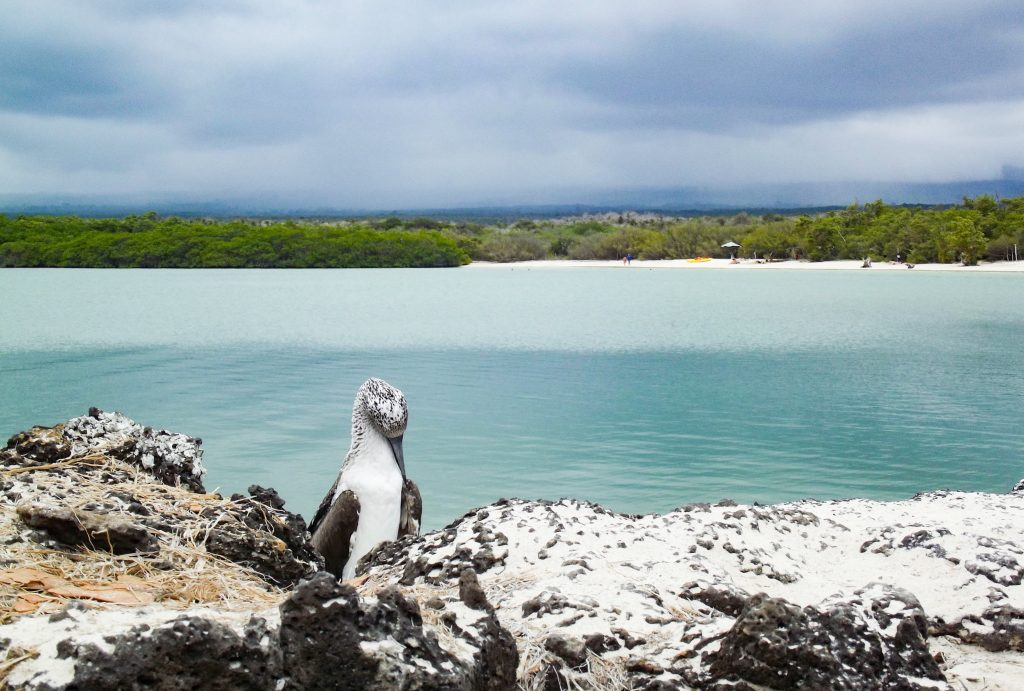 Tortuga Bay | Discover Your South America Blog
