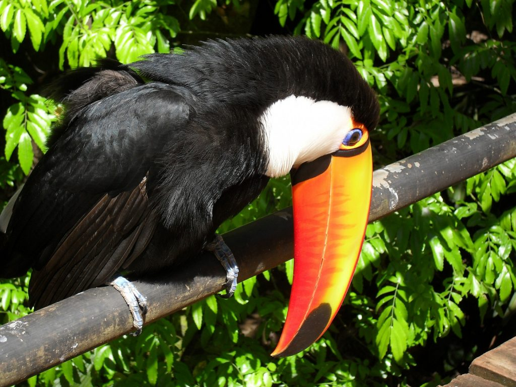 Toucan | Discover Your South America Blog