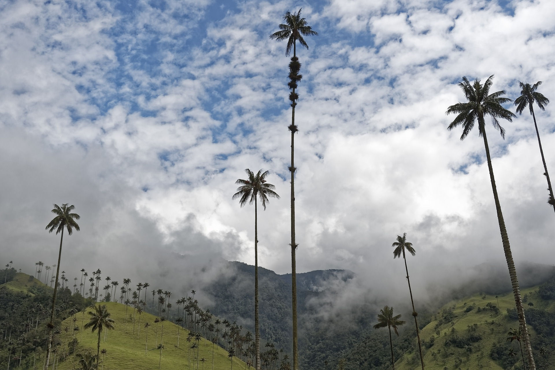 Cocora Valley | Discover Your South America Blog