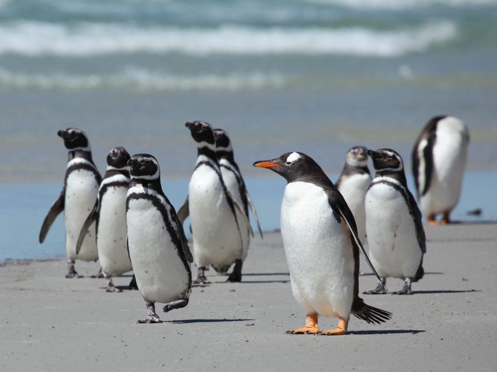 Magellan Penguins, Valdes Peninsula | Discover Your South America Blog