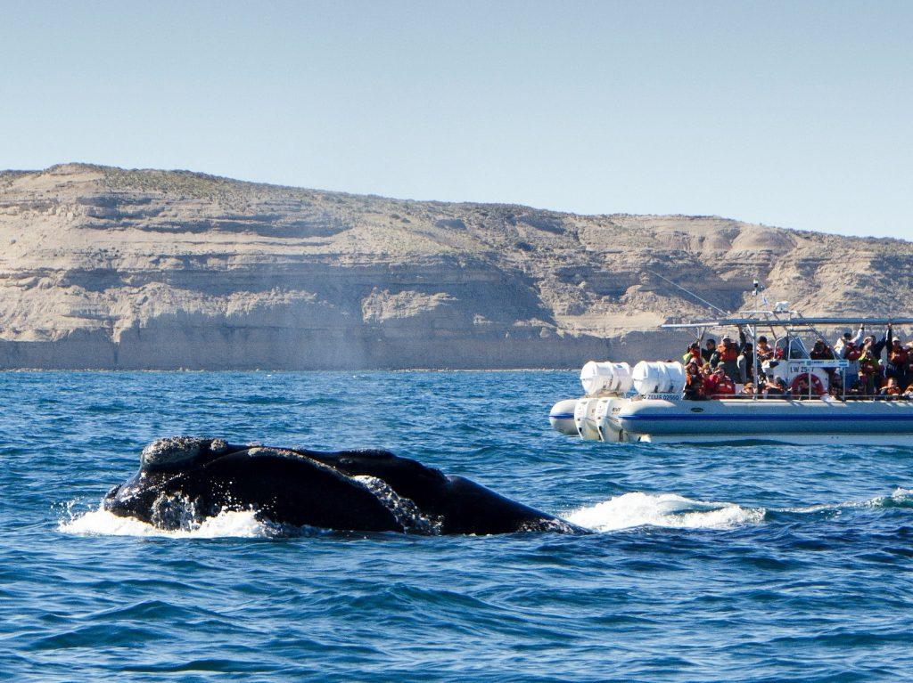 Whale Watching in the Valdes Peninsula | Discover Your South America Blog