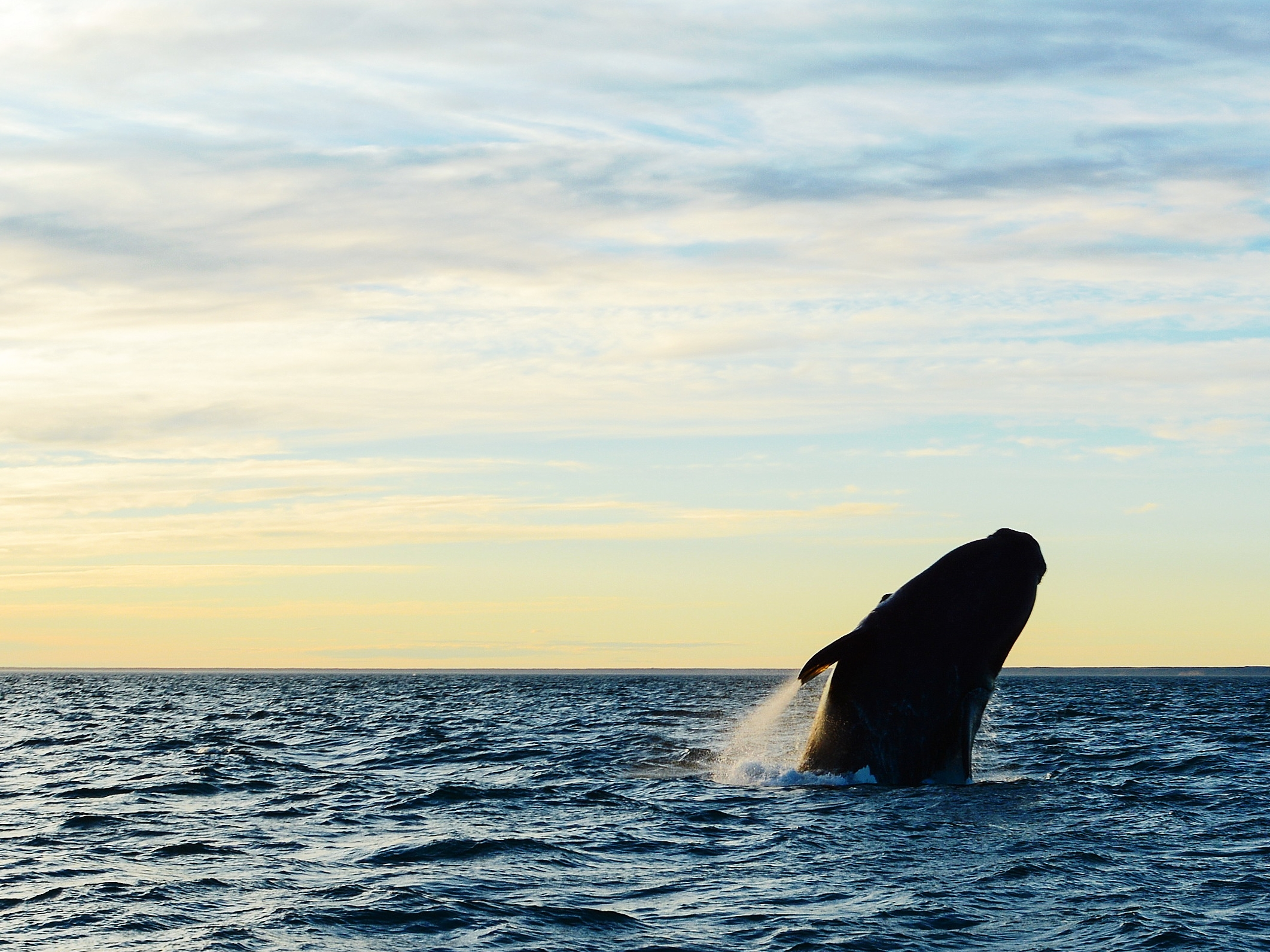 Whale watching, Valdes Peninsula | Discover Your South America Blog