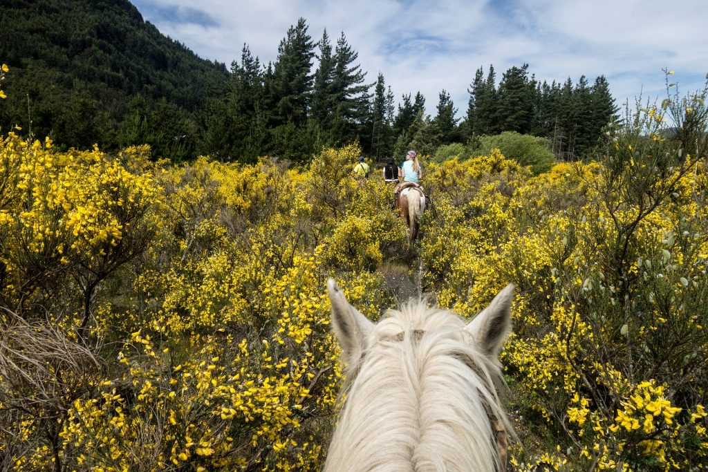 Horse riding in South America | Discover Your South America Blog